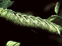 Hummingbird Moth Season Is Coming