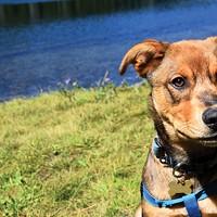Life as a Central Oregon Pup
