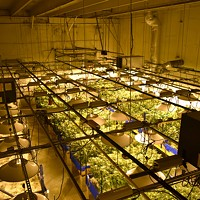 Deschutes County Files Appeals in Two Pot Farm Cases