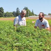 Hemp Symposium Ahead at OSU