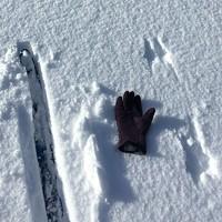 Winter Wildlife Tracking