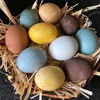 The Wonders of Chickens, for Easter or Any Other Time