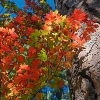 It's Leaf-Peeping Season