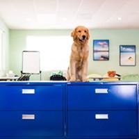 Meet the Shop Dog: Mr. Gibson