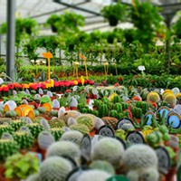 COBA Spring Home and Garden Show to Offer Free Gardening Classes