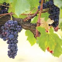 Cork & Barrel: The Fundraiser Wine Lovers Shouldn't Miss