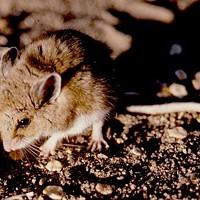 Wildlife and Diseases