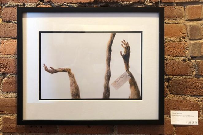 Frank Miller, Specimens: Squirrel Monkey 2013, Archival Electronic Print. - ARTWORK BY FRANK MILLER