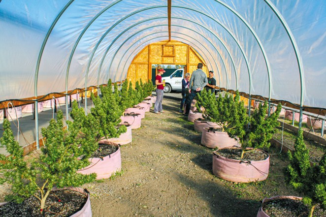 Stacie Johnson, at left, and Tim Fratto, at right, explain harvest methods to a visiting couple at Central Oregon CBD. - NICOLE VULCAN
