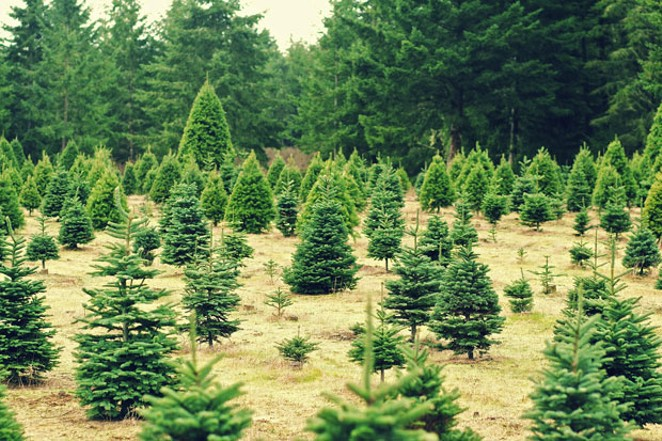 A recession, a sapling shortage and hot summers have led to a statewide shortage of Christmas trees. - PIXABAY