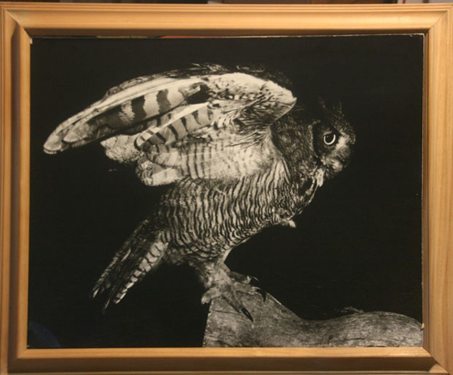 Bill Marsh's portrait of Owl. He won a lot of awards with it. - BILL MARSH