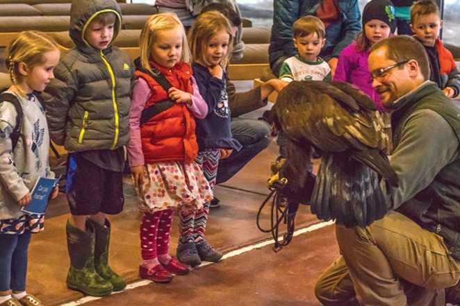 Get up close with birds of prey at the High Desert Museum . - COURTESY OF THE HIGH DESERT MUSEUM