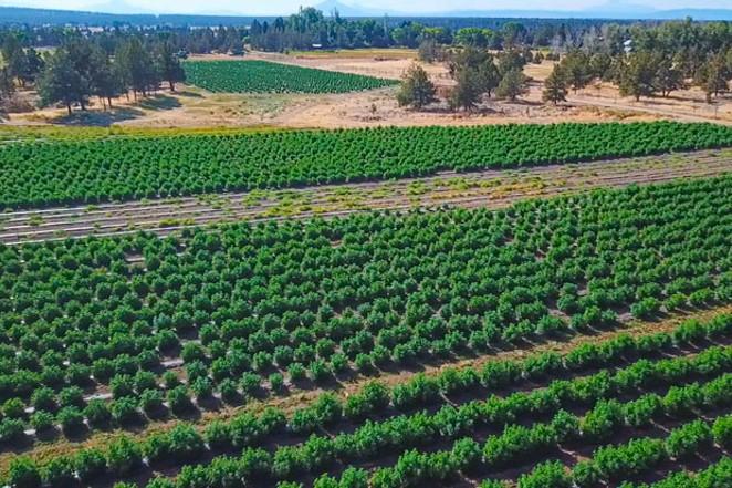 KLL Farms, 14 acres, Redmond - GREG MORING