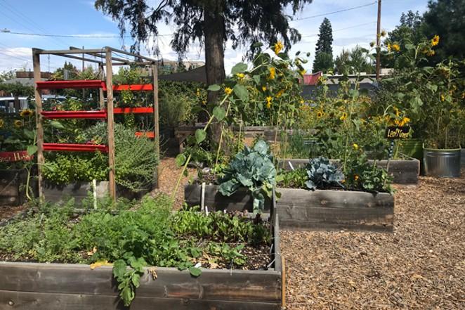 Part of the The Environmental Center's Kansas Avenue Learning Garden. - DENISE ROWCROFT