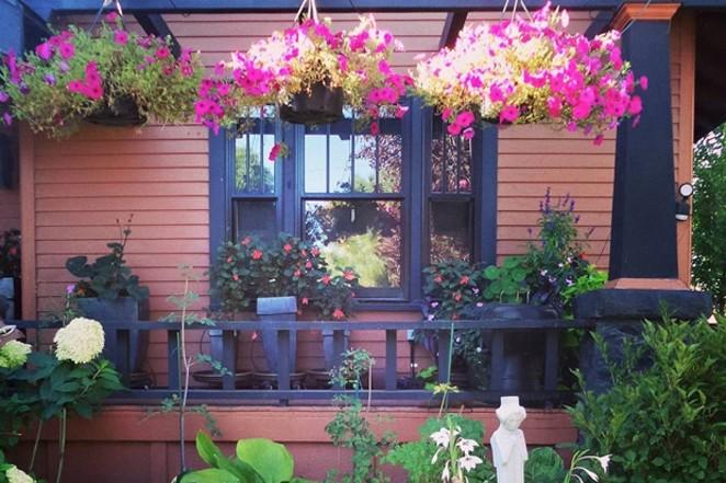 Cameron Clark's residential garden in full bloom. - CAMERON CLARK