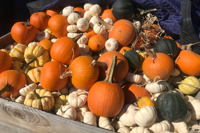 Pumpkins for the fall season at Well Rooted Farms. - COURTESY WELL ROOTED FARMS