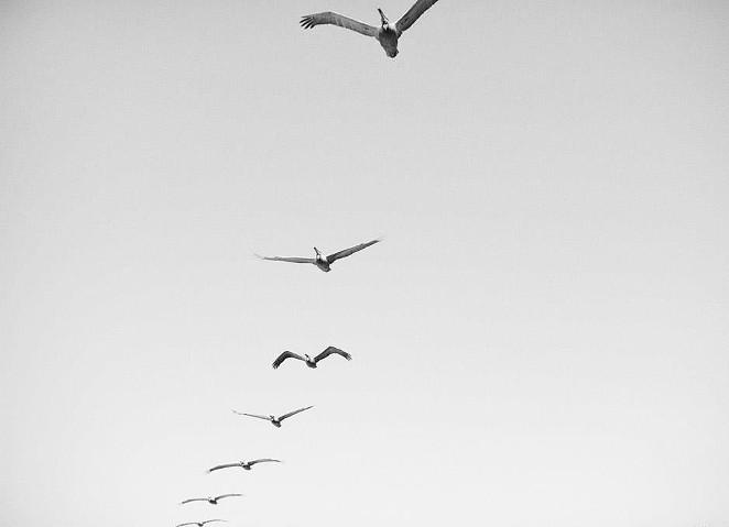 Be free. - PHOTO BY ROBERT HAMILTON