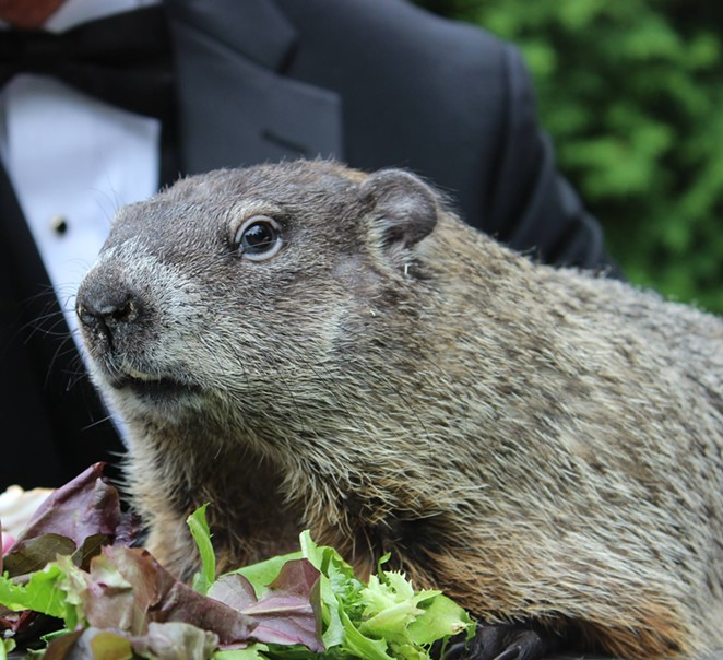 Punxsutawney Phil giving major side-eye. - PUNXSUTAWNEY PHIL / FACEBOOK