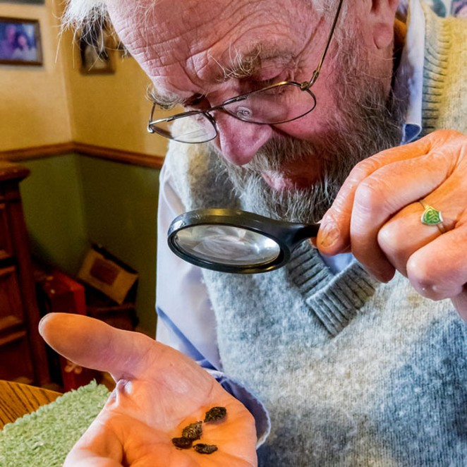 The author takes a close look at some small dark objects that could be raisins, but are probably bugs. - SUE ANDERSON