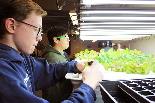 Student Manny assesses the Pilot Butte aquaponics garden as Samuel feeds the juvenile root system of a new plant into a styrofoam hole where the roots can reach nutrients in the water below. - KM COLLINS
