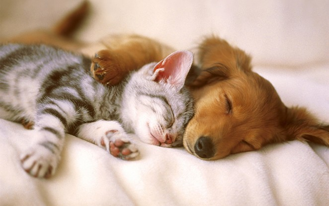Try not to fall all over yourself. Cuddle pups n kittens in da house. - FLICKR