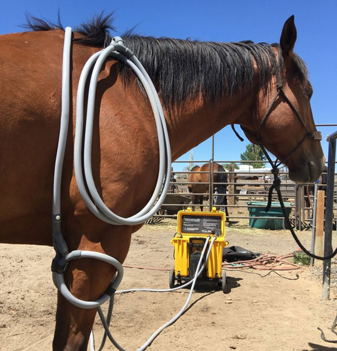 PEMF therapy was first FDA approved for use on horses and can now be used on a variety of animals. - SUBMITTED.