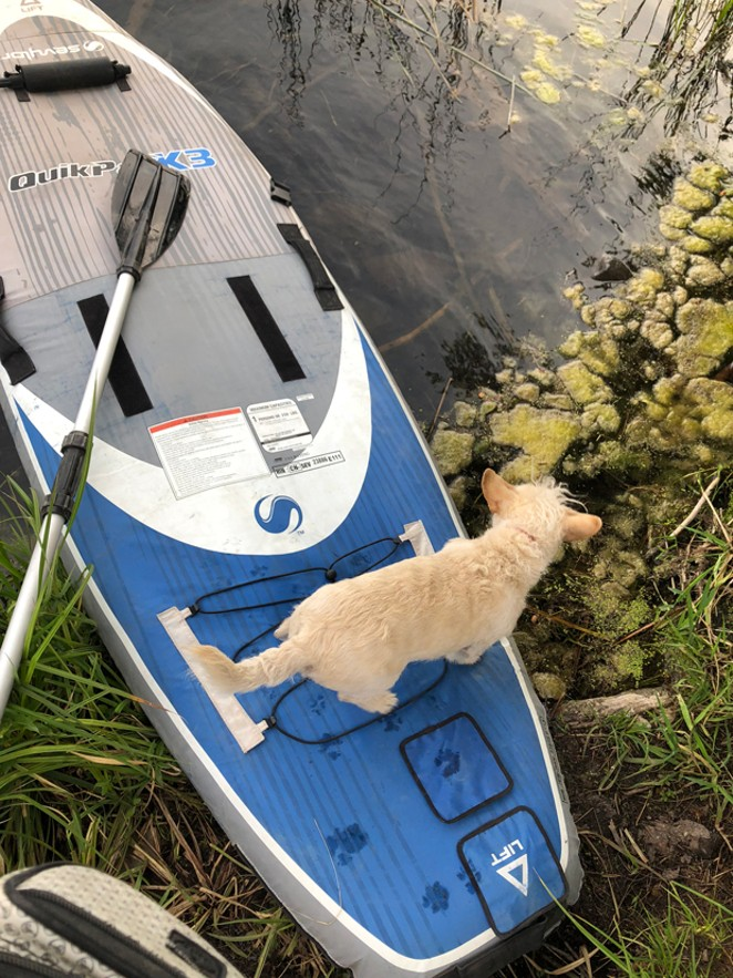 Some less-than-ideal algae at Blue Lagoon didn't stop this paddler from experiencing the spot's aquamarine delights. - NICOLE VULCAN