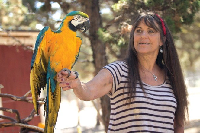 Linda Rose Forney and her pet macaw, Cosmo. - KYLE SWITZER