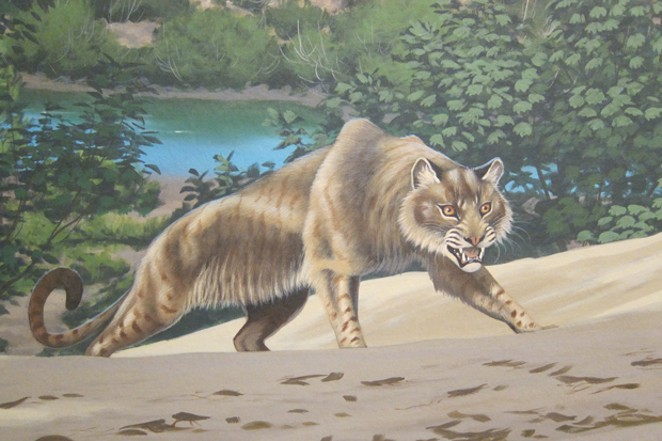 The John Day Tiger, closer to the size of a lion, recreated in a presumed ambush predatory posture. - NATIONAL PARKS SERVICE AND ROGER WITTER