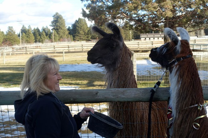 Jori, center, came running to get in the picture with Terri Holm, left, and Jori's cria Skorcher. - ELIZABETH WARNIMONT