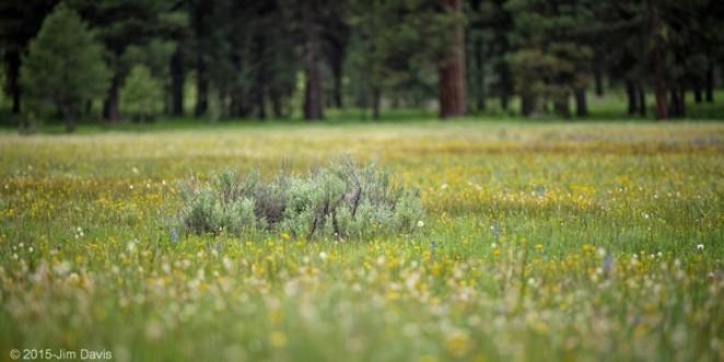 Ochoco National Forest. - JIM DAVIS, DESERTDUSTIMAGES.BLOGSPOT.COM