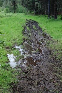 A mudded area by OHVs illegally tearing up McKay Creek Meadow in the Ochoco National Forest. - SCOTT STAATS