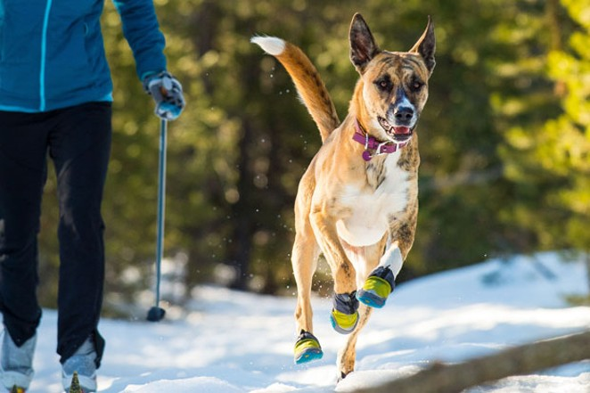 Even the most winter-ready dog can benefit from booties and other warmer gear for those long days outside. - RUFFWEAR