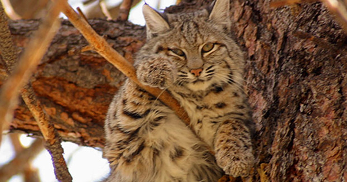The Bobcat Business Natural World Bend The Source Weekly Bend Oregon