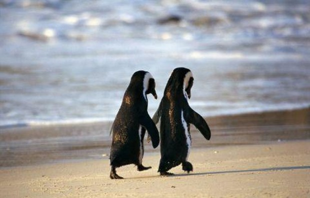 Like a Tuxedo at the Beach?