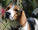 An Uptick in Returned Pets?