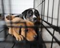 Don't Shop, Adopt