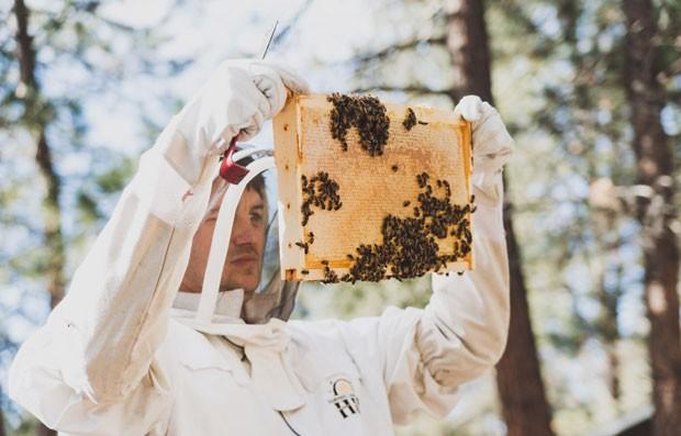 R.I.Bee.