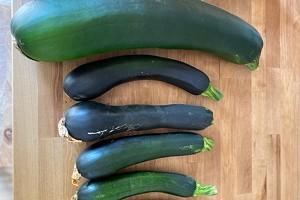 Gardeners' Abundance Becomes Food Bank Bounty