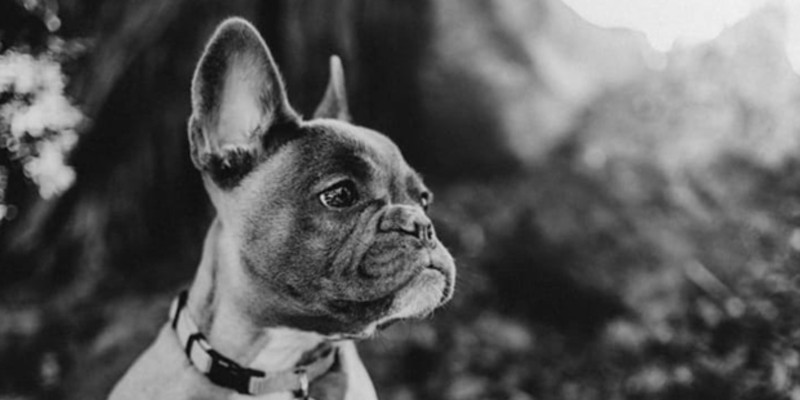 In honor of this Central Oregon Pets issue, a dog photo, of course! @metalheadsboutique shared this one of an irresistible pup. Share your photos with us @sourceweekly and get in the running for our Instagram of the Week. Winners get a free print from @highdesertframeworks!