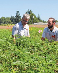 Jay Noller, left, director and lead researcher of the Oregon State University Global Hemp Innovation Center, and Lloyd Nackley, a hemp researcher, when the center launched.