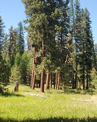 An out of court settlement blocked logging in areas that are crucial to Rocky Mountain Elk and Redband Trout.