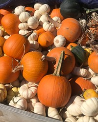 Pumpkins for the fall season at Well Rooted Farms.