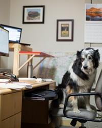 Meet the Shop Dog: Maddie