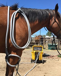 PEMF therapy was first FDA approved for use on horses and can now be used on a variety of animals.