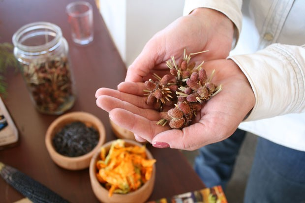 Olson holds a handful of ponderosa pine flowers—from which she'll harvest ponderosa pollen to top her roasted purple carrot soup—one of the items on her special Thanksgiving Day menu. - NICOLE VULCAN