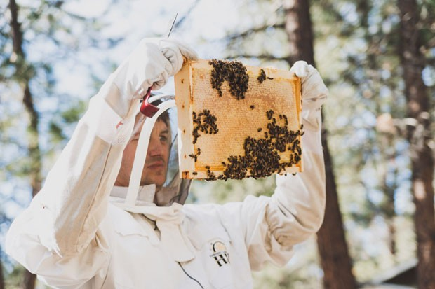 In full protective gear, Jimmy Wilkie, owner of Broadus Bees, makes sure his hives are thriving. - AMANDA PHOTOGRAPHIC