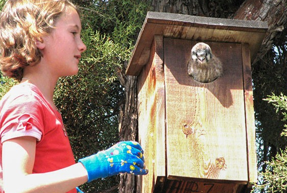 """In Case You Missed It: Jim Anderson's story, """"Home for Birds and Bats"""" - COURTESY JIM ANDERSON"""