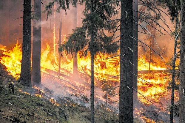 The development of Skyline Forest could spell major timberland destruction. - PIXABAY