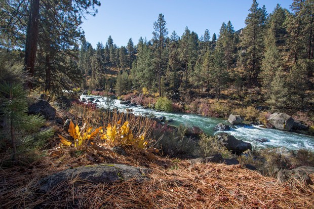 One of the many scenic spots by the Deschutes River at Riley Ranch Nature Reserve. - COURTESY BEND PARKS & REC